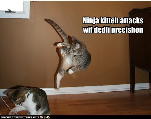 Ninja kitteh attacks wif dedli precishon
