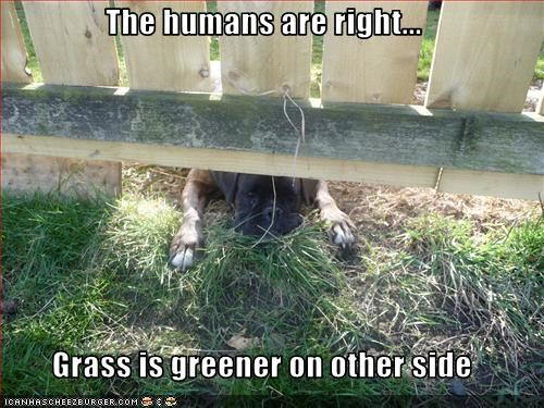 The humans are right...  Grass is greener on other side