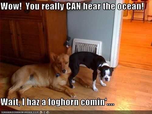 Wow!  You really CAN hear the ocean!  Wait, I haz a foghorn comin'....