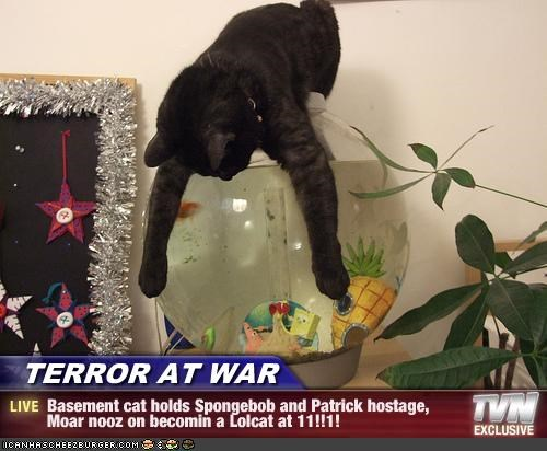 TERROR AT WAR - Basement cat holds Spongebob and Patrick hostage,    Moar nooz on becomin a Lolcat at 11!!1!