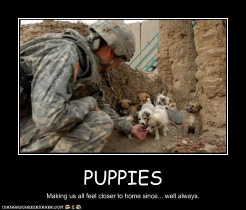 home,jack russel terrier,military,puppies,Sad,soldiers