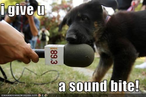 bite,microphone,puppy,whatbreed
