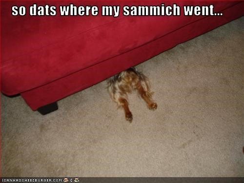 so dats where my sammich went...