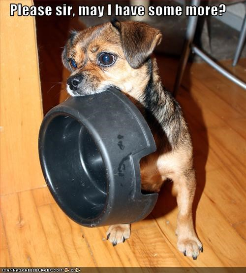 bowl,chihuahua,food,hungry,more,puppy