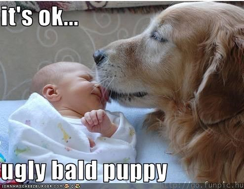 it's ok...  ugly bald puppy