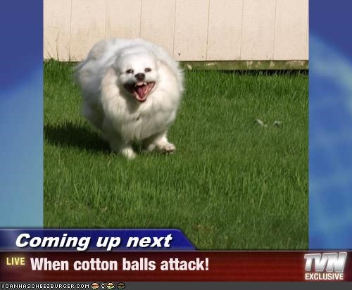 Coming up next - When cotton balls attack!