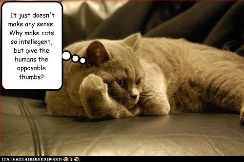 It just doesn't make any sense. Why make cats so intellegent, but give the humans the opposable thumbs?
