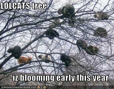 LOLCATS tree  iz blooming early this year