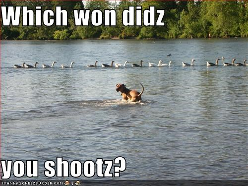 Which won didz  you shootz?