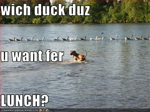wich duck duz u want fer LUNCH?