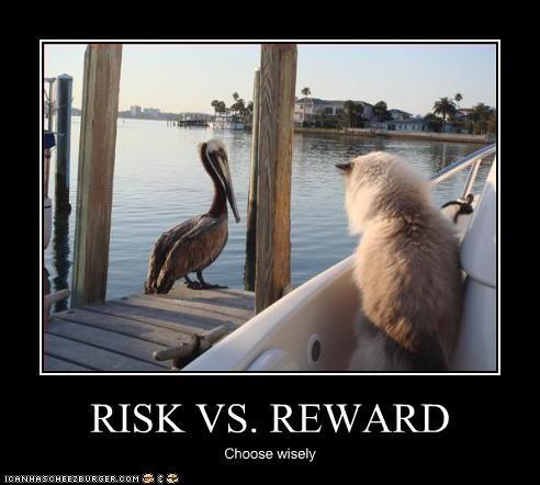danger,lolbirds,rewards,scary