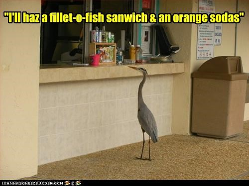 """I'll haz a fillet-o-fish sanwich & an orange sodas"""