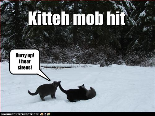 Kitteh mob hit