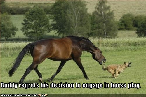 Buddy regrets his decision to engage in horse play.