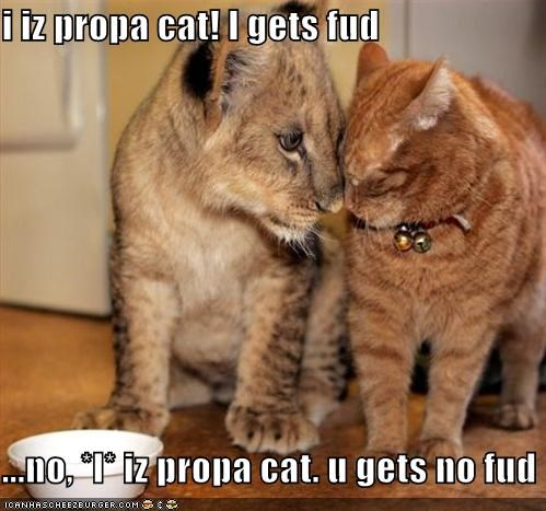 i iz propa cat! I gets fud  ...no, *I* iz propa cat. u gets no fud