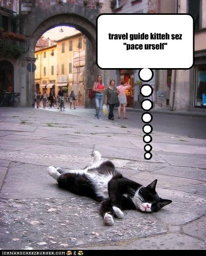 "travel guide kitteh sez ""pace urself"""