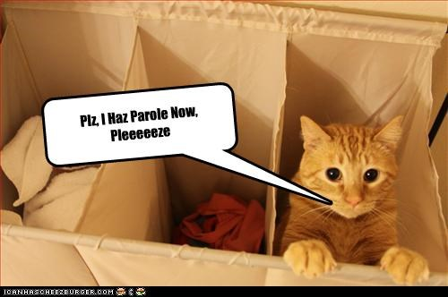Plz, I Haz Parole Now, Pleeeeeze
