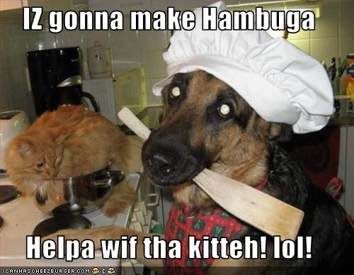 IZ gonna make Hambuga   Helpa wif tha kitteh! lol!