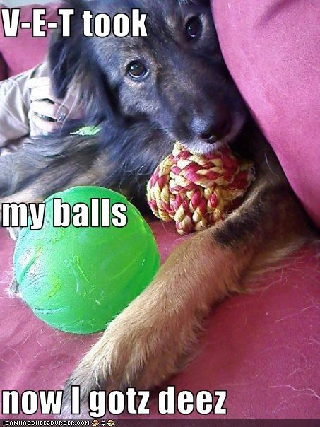 V-E-T took my balls now I gotz deez