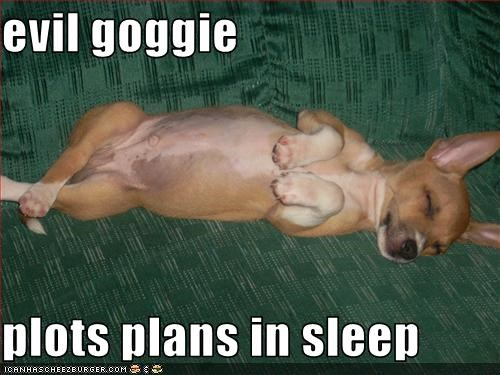 evil goggie  plots plans in sleep