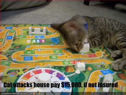 Cat attacks house pay $15,000, if not insured
