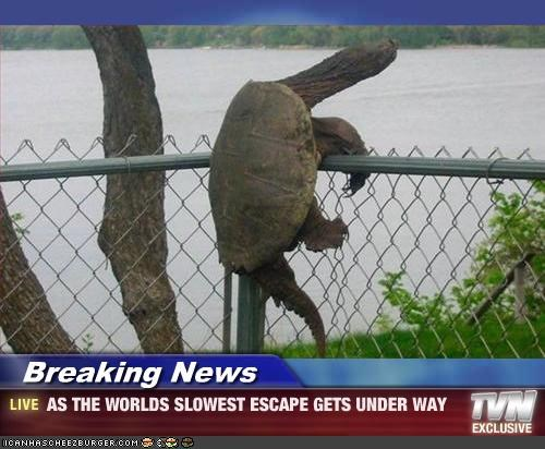 Breaking News - AS THE WORLDS SLOWEST ESCAPE GETS UNDER WAY