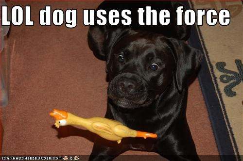 LOL dog uses the force