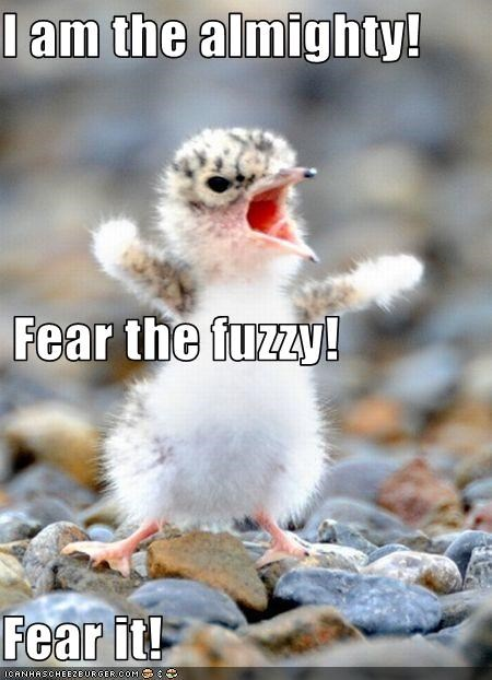 I am the almighty!  Fear the fuzzy! Fear it!