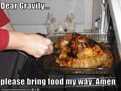Dear Gravity...  please bring food my way. Amen