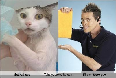 Cats,lolcats,scared,sham wow,Vince Offer