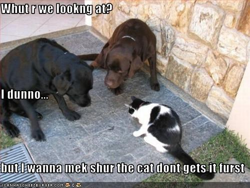 Whut r we lookng at? I dunno... but I wanna mek shur the cat dont gets it furst