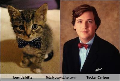 bow tie kitty Totally Looks Like Tucker Carlson
