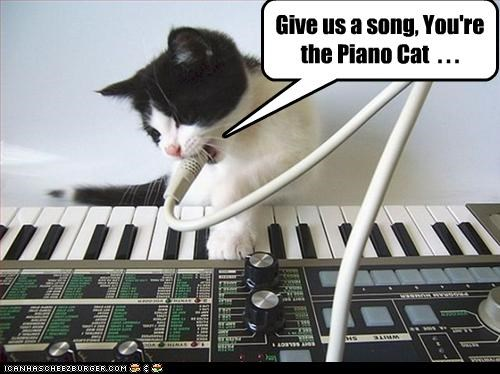 Give us a song, You're the Piano Cat  . . .