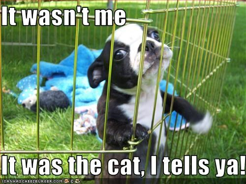 It wasn't me  It was the cat, I tells ya!