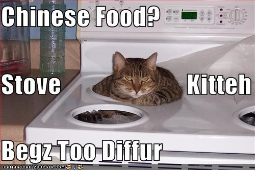 Chinese Food? Stove                         Kitteh Begz Too Diffur