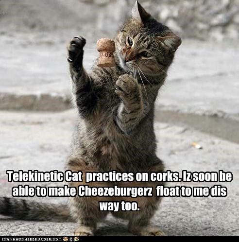 Telekinetic Cat  practices on corks. Iz soon be able to make Cheezeburgerz  float to me dis way too.