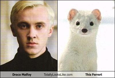 Draco Malfoy Totally Looks Like This Ferrert