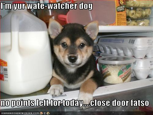 I'm yur wate-watcher dog  no points left for today....close door fatso