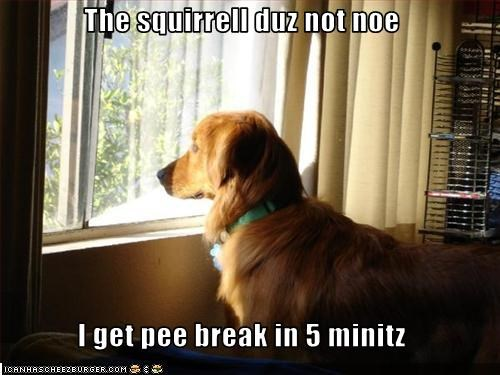 The squirrell duz not noe  I get pee break in 5 minitz