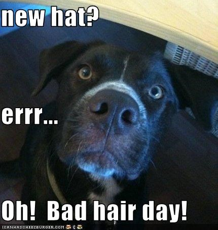new hat? errr... Oh!  Bad hair day!
