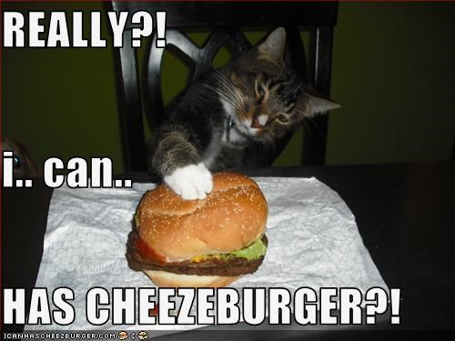 REALLY?! i.. can.. HAS CHEEZEBURGER?!
