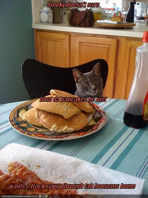 Smoky doesn't care  bout da pancakes he just wants 2 track syrup through tah hoomans home