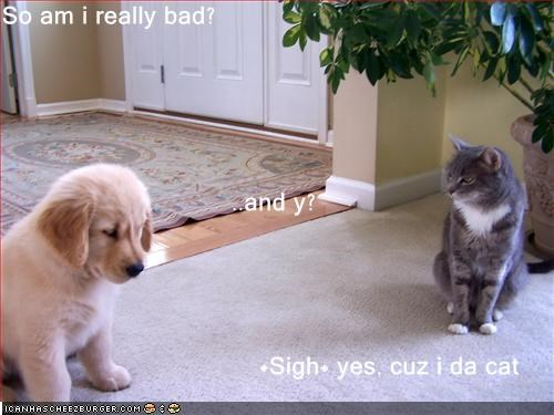 So am i really bad? ..and y?                                    *Sigh* yes, cuz i da cat