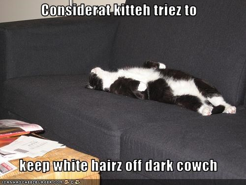 Considerat kitteh triez to  keep white hairz off dark cowch
