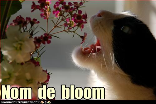 bad cat,Flower,nom nom nom