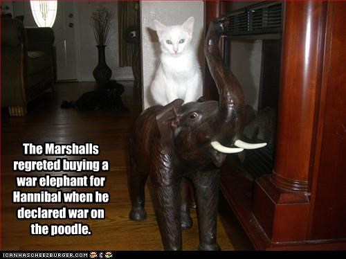The Marshalls regreted buying a war elephant for Hannibal when he declared war on the poodle.