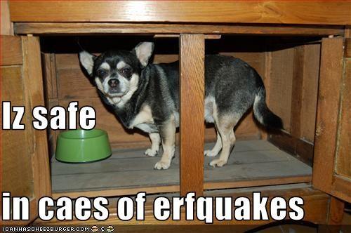cabinet,chihuahua,earthquake,protection,safe