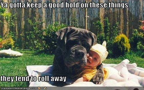 baby,cuddle,guard dog,hold,human,neopolitan mastiff,rolling,watch