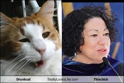 Drunkcat Totally Looks Like Thischick