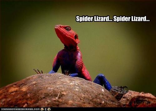 Spider Lizard... Spider Lizard...